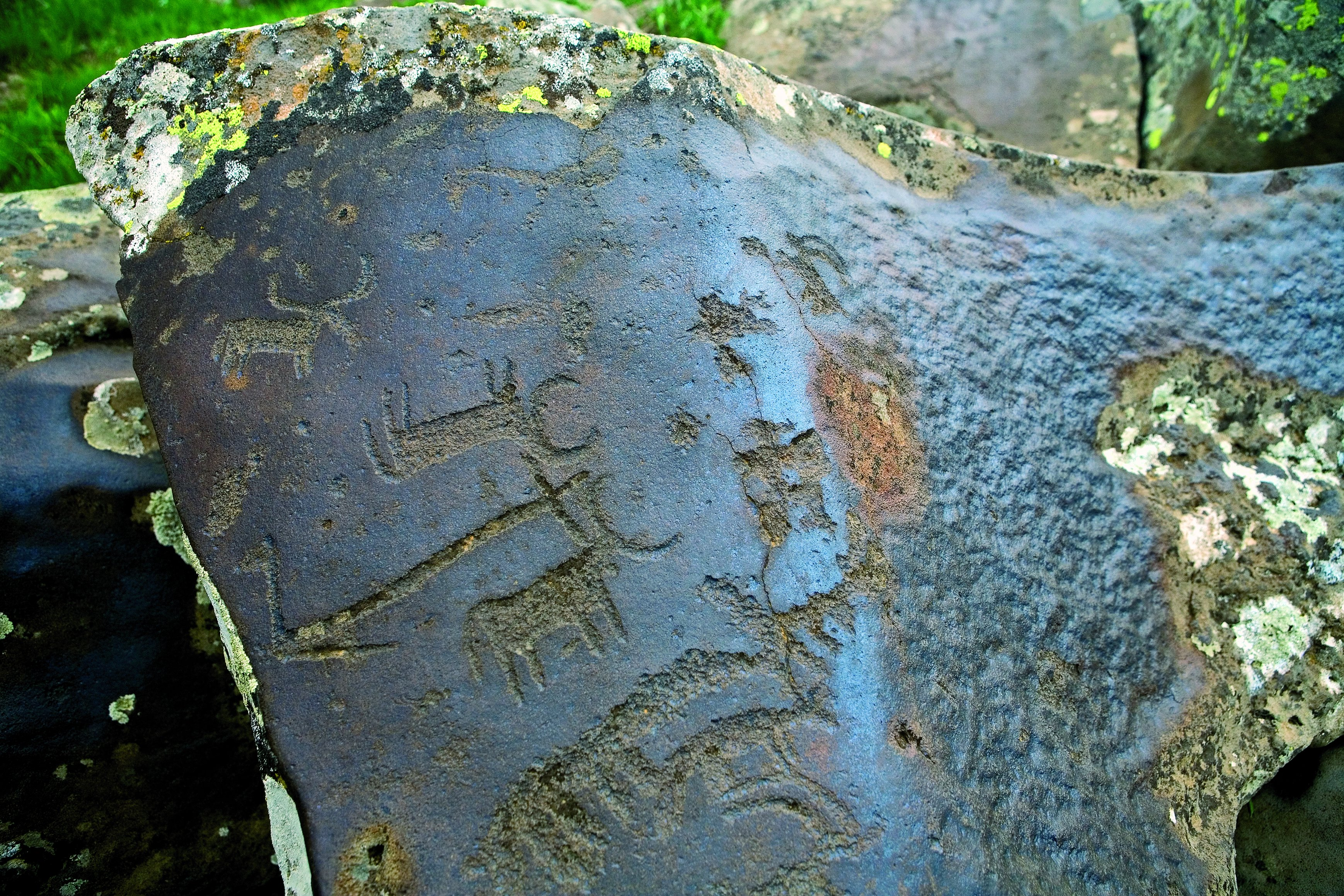 Petroglyph of Bulls on the Slope of Ukhtasar Volcano